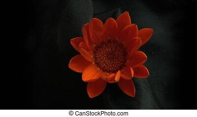 blossom flower time effect - blossom flower 4k strange...