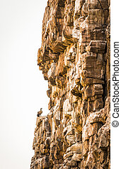 Vulture on Cliff - Large Vulture perched on a canyon wall in...