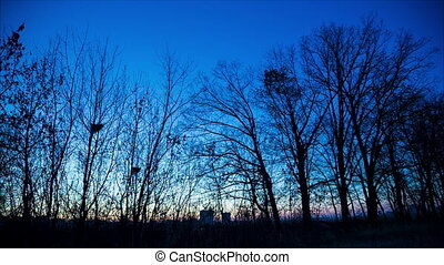 Panorama of twilight in winter forest - Panoramic view of...