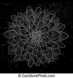 black and white dahlia flower isolated.