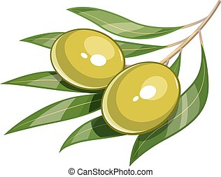 Pair of green olive vector illustration eps10 - Pair of...