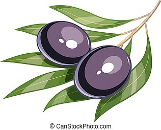 Pair of black olive vector illustration eps10 - Pair of...