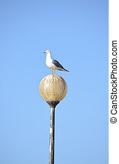 A seagull perched a lamp set