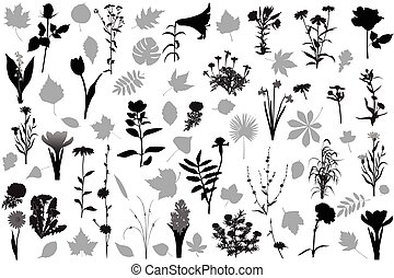66 silhouettes of flowers and leave - Collection of 32...