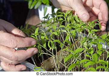 Seedlings on the vegetable tray - Photo planting seedlings...