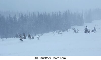 Snowstorm in Winter Mountain - Snowstorm in winter misty...