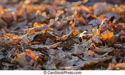 swinging yellow oak leaf on the ground - swinging on wind...