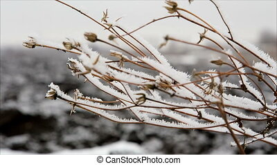 Twig with hoarfrost in winter field, december landscape