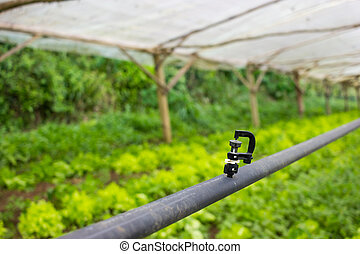 greenhouse watering system injector - Simple Greenhouse...