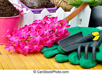 Hyacinth flowers with gardening tools - Hyacinth flowers...