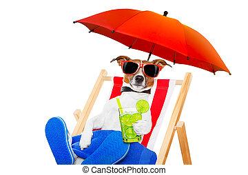 dog beach cocktail - jack russell dog with caipirinha...