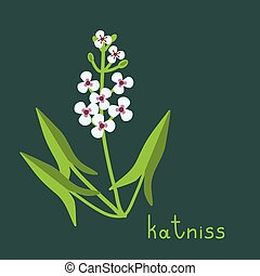 Katniss plant illustration - Katniss plant vector simple...