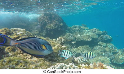 Many exotic fish in the surf zone