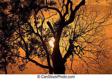 árboles, silueta, ocaso,