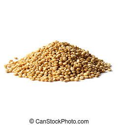 Quinoa, blanco, semillas