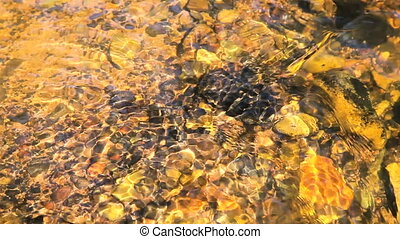 Small waves on a water surface as background in golden tone