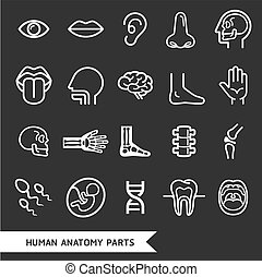 human anatomy - Human anatomy body parts detailed icons set
