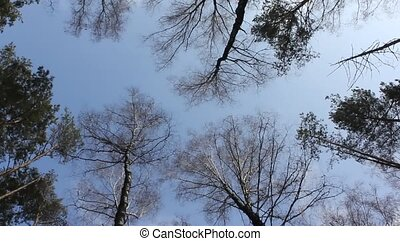wobble treetops - The tops of the trees make the slow...