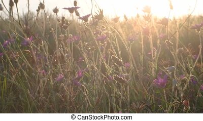 Small wild flowers fluttering on the wind backlit, warm...
