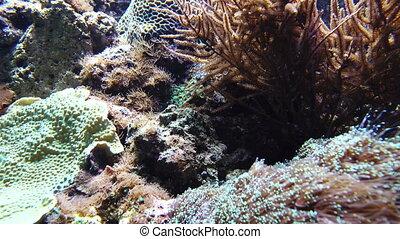 Underwater Fish and Seaweed - Underwater footage of fish...