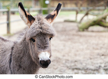 young donkey looks to the camera