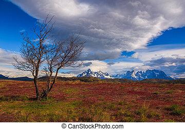Around Chilean Patagonia - Breathtaking Views Await You at...