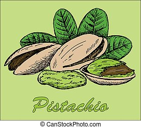 nut pistachio. hand drawing set of vector sketches