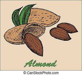 nut almond. hand drawing set of vector sketches