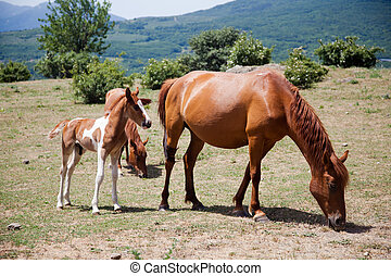 large and small horses grazing in field in mountains in...