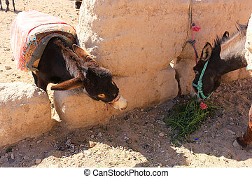 Donkeys in Rissani, Morocco - Donkey in corral trying to...
