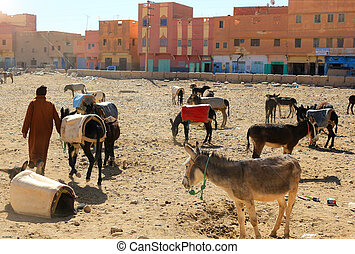 Donkeys in Rissani, Morocco - A herd or drove of worker...