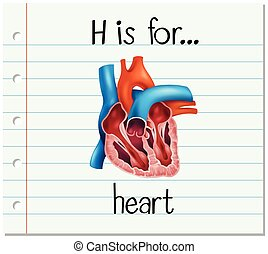 Flashcard letter H is for heart illustration
