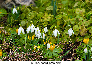 Early spring flowers in a garden