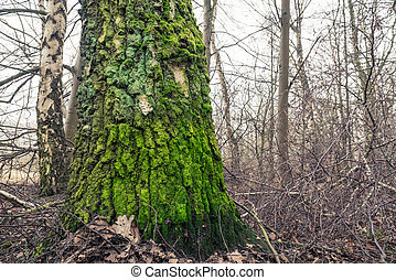 Tree with green moss on the barch