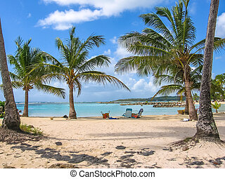 the Guadeloupe Caribbean - Coconut palms, turquoise sea and...