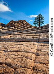 White Pocket, Arizona, USA