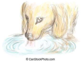 dog drinking water. Beagle dog and blue water