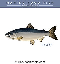Chum Salmon Marine Food Fish - Chum salmon illustration...