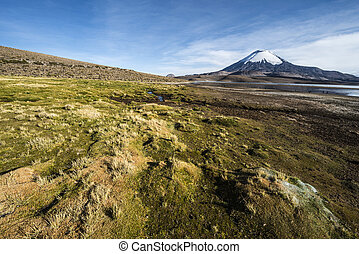 Snow capped Parinacota Volcano reflected in Lake Chungara,...