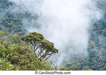 Clouds envelop the hills near Macas, Andes Ecuador