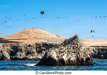 Ballestas Islands, Paracas National Reserve in Peru -...
