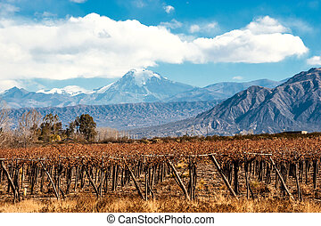 Volcano Aconcagua and Vineyard, Argentine province of...
