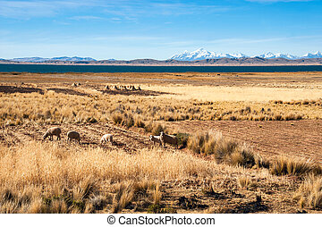 Lake Titicaca from the bolivian side - Shore of Lake...