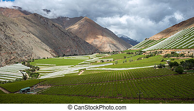 Spring Vineyard Elqui Valley, Andes part of Atacama Desert...