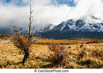 Autumn in Patagonia The Torres del Paine National Park in...