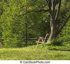 Folding chair standing under the spring ceiba tree on a...