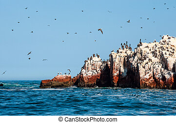Ballestas Islands, Paracas National Reserve. Peru