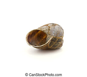 Snail Shell - Empty garden snail shell isolated against...