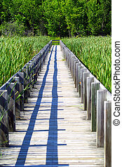 Boardwalk in Marshes - A wooden boardwalk cuts through the...