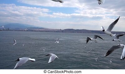 Seagulls Flying and Sea Slow Motion